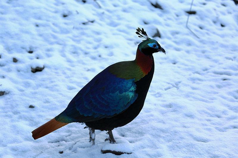 从遇见率看西藏野生动物保护成效